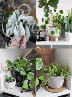 cat-safe houseplants