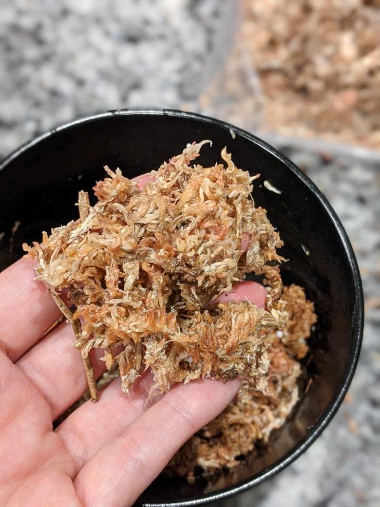 wet sphagnum moss