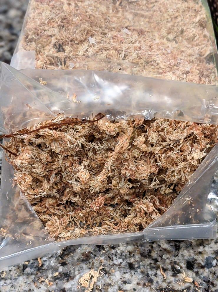 dry sphagnum moss