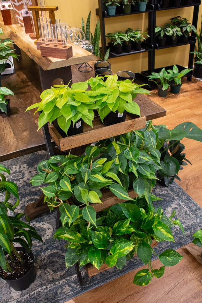 Take Root Houseplant Shop in Frederick, MD