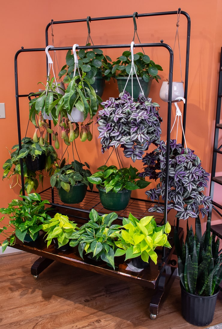 beautiful hanging planters at Take Root Houseplant Shop