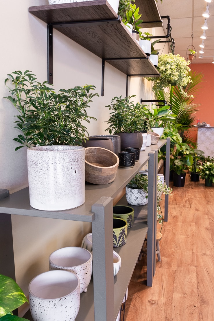 beautiful pots and planters on shelves