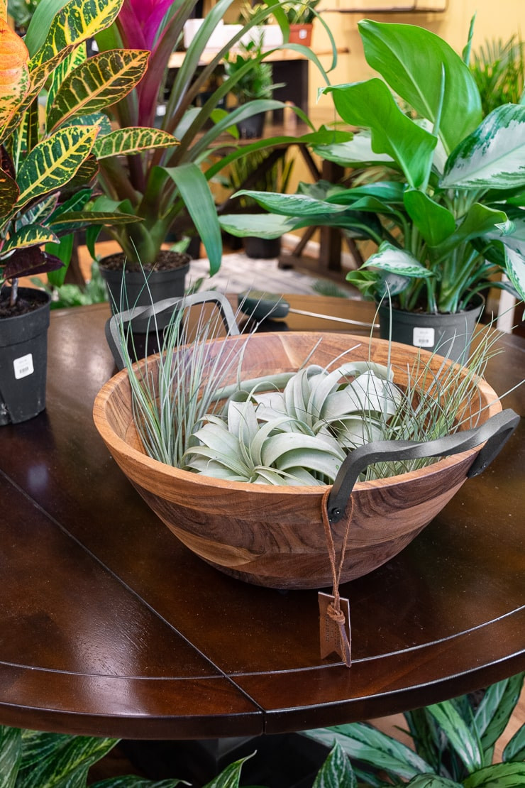 air plants in a wooden bowl