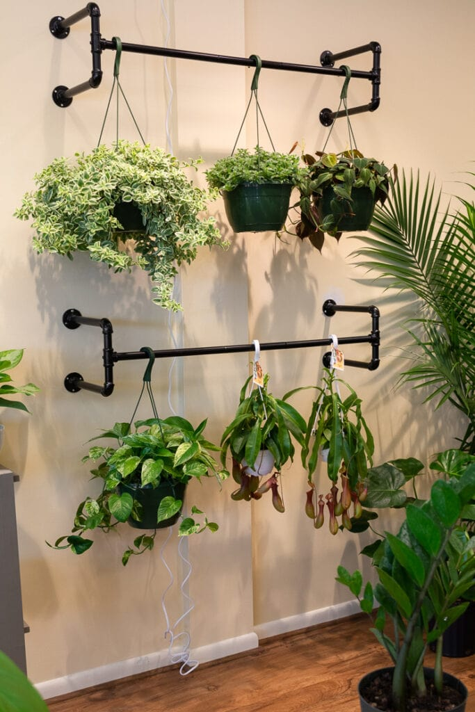 hanging plants on a pipe hanger