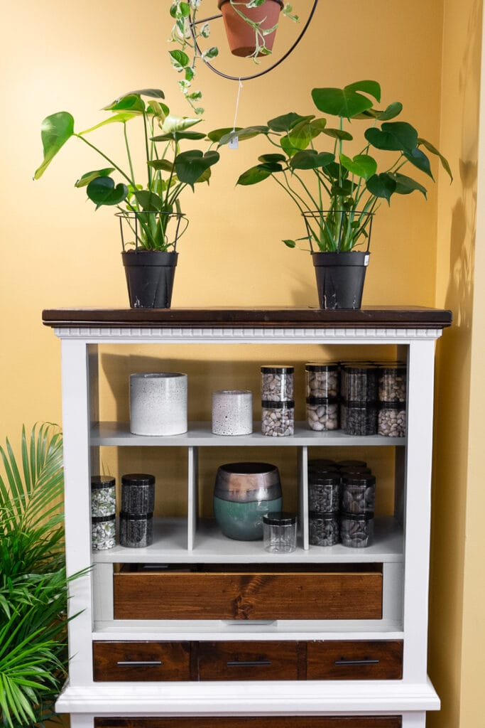 monstera plants on an old dresser