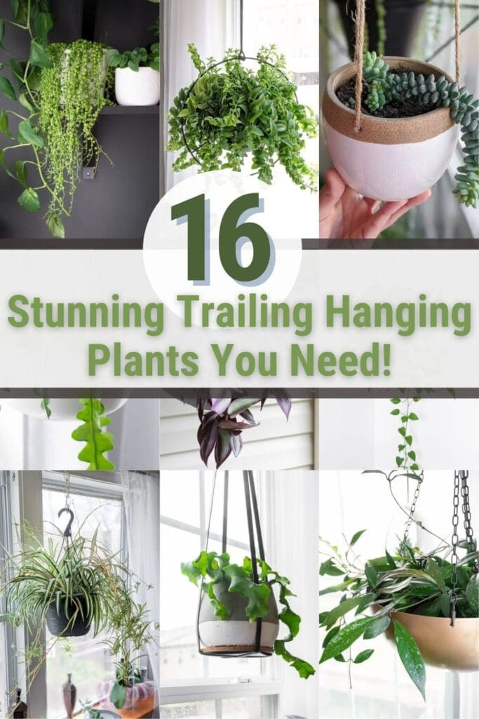 image collage of best indoor hanging plants with text 16 Stunning trailing hanging plant you need!