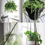 16 of the Best Indoor Hanging Plants: Stunning Trailing Houseplants!