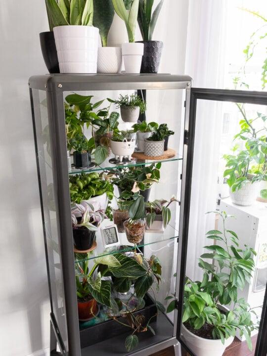 Fabrikor Ikea Greenhouse