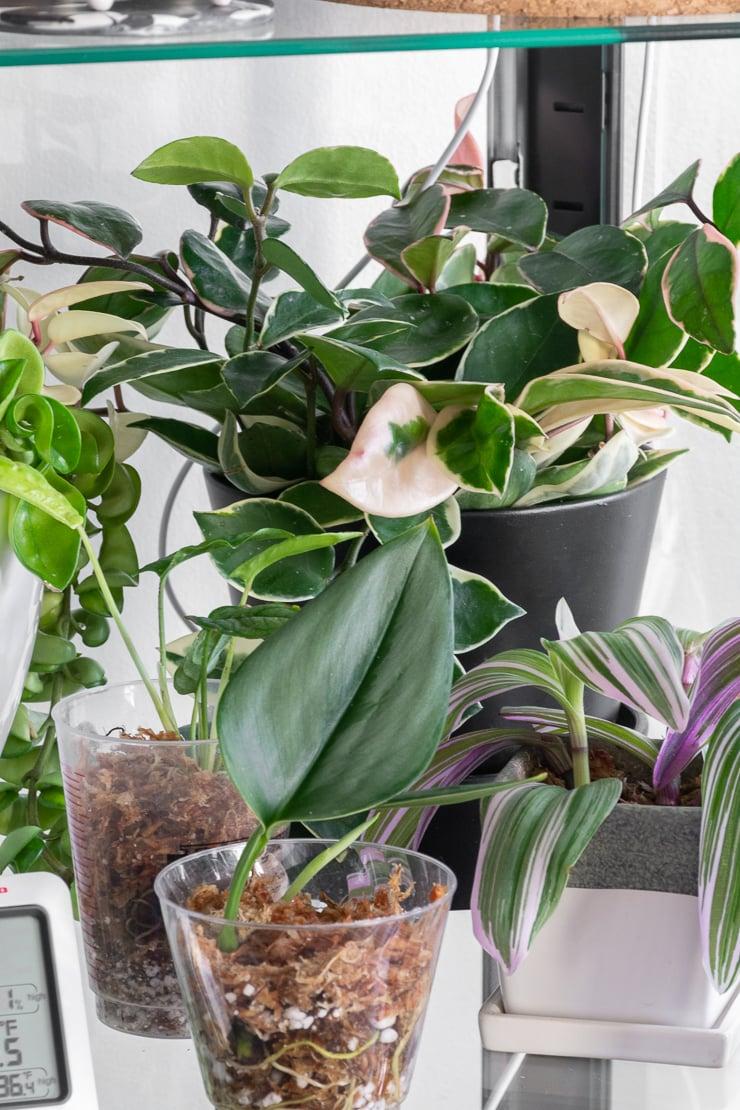 beautiful plants in an ikea greenhouse