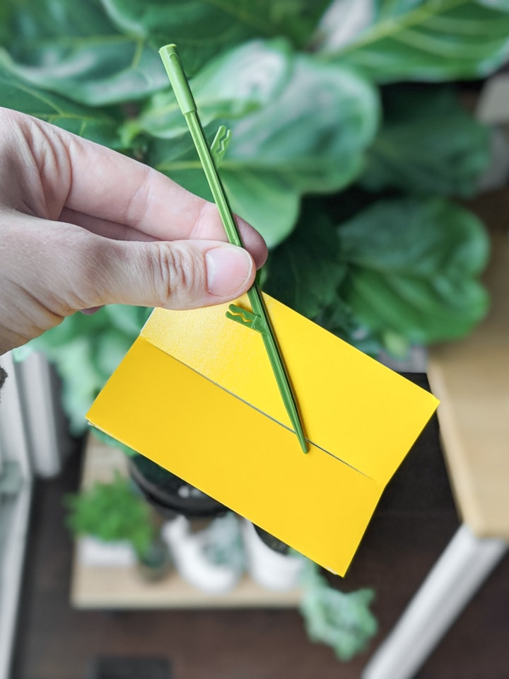 yellow sticky stakes for gnat control