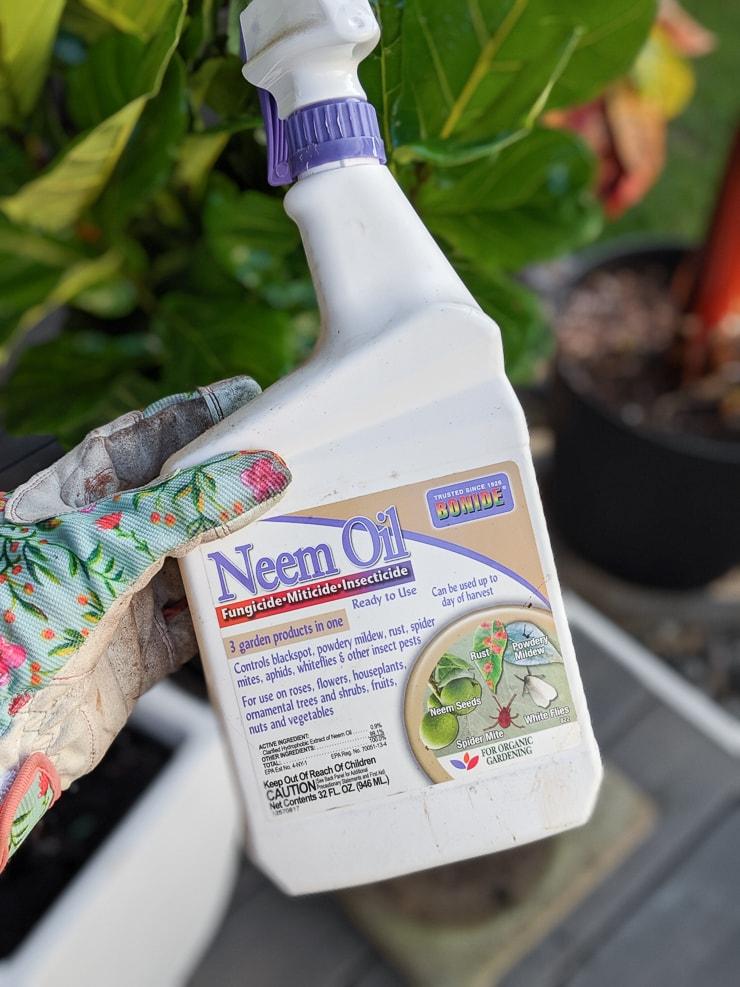 bottle of neem oil