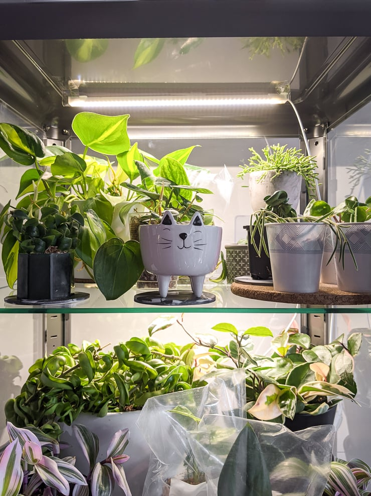 strip lighting for indoor plants