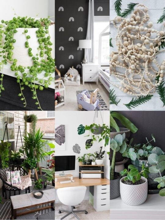 25 of My Most Popular DIYs and Plant Care Posts From 2020