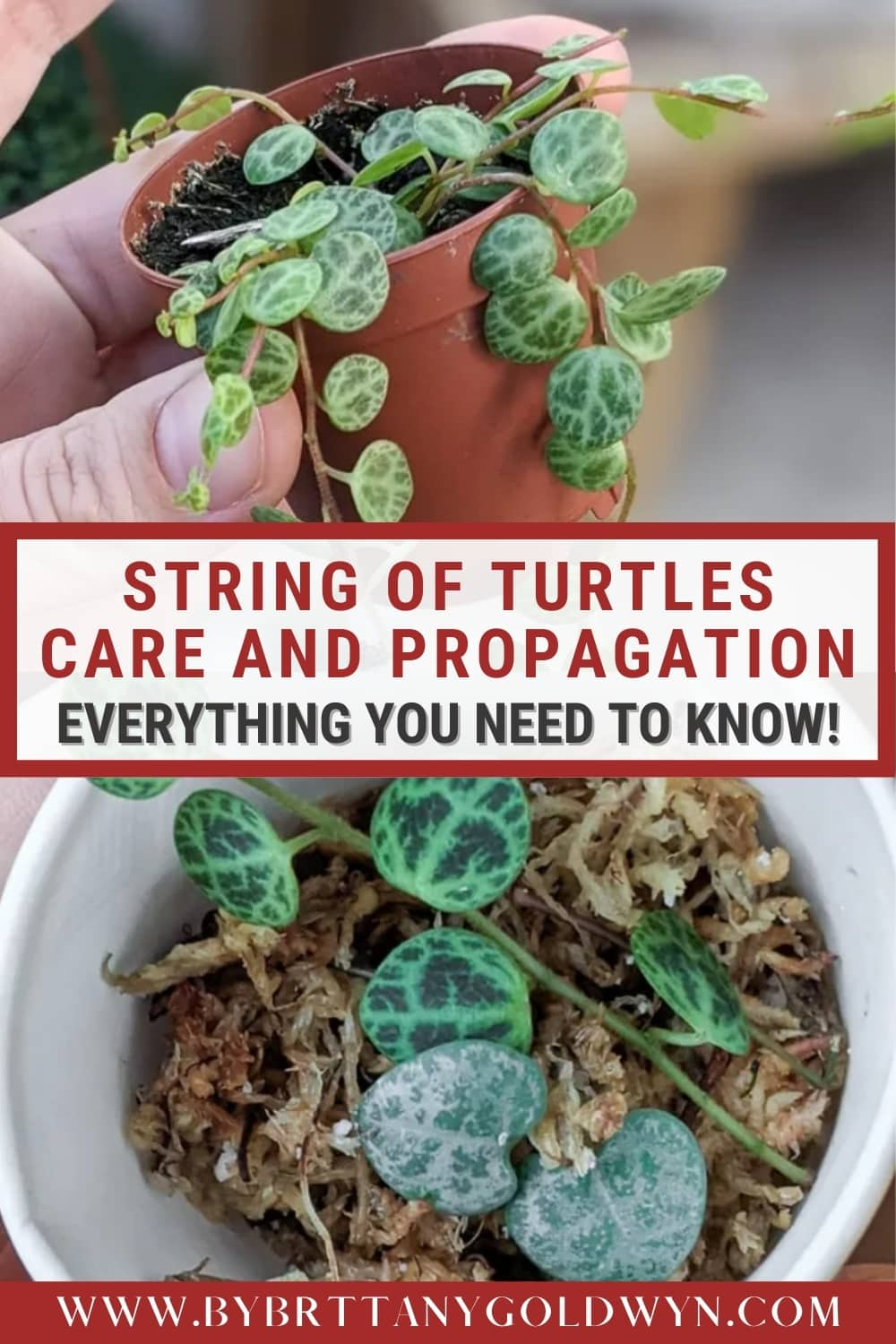 image collage of string of turtles with text overlay