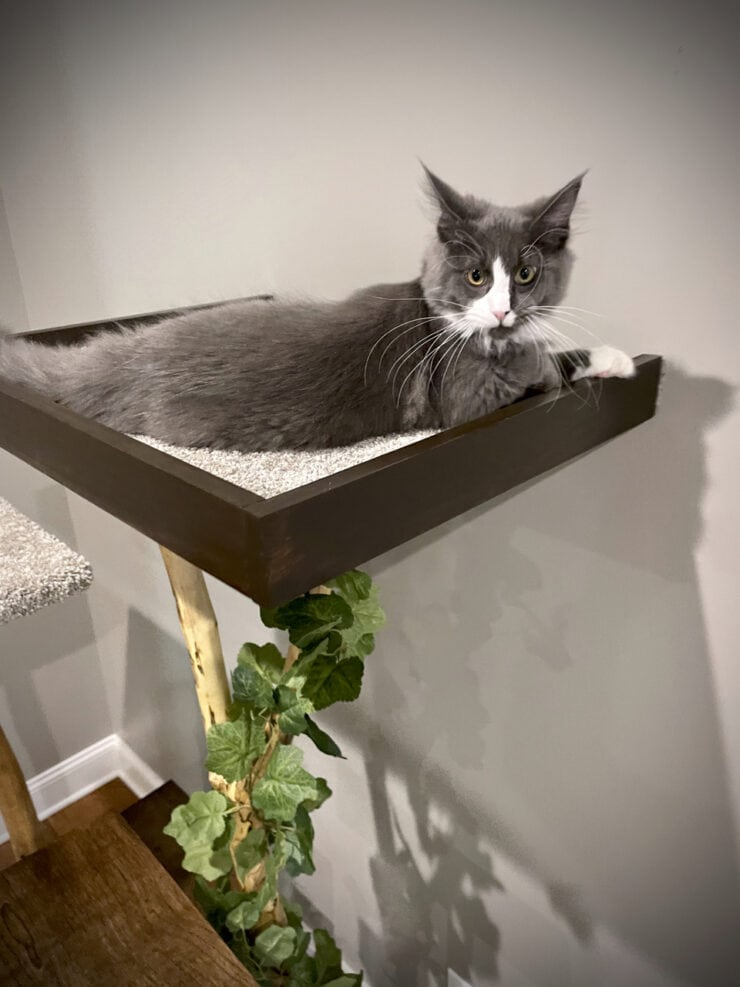 maine coon kitten on a DIY cat tree using real branches