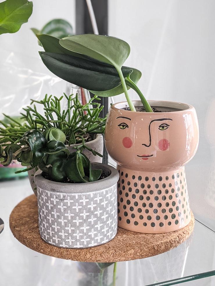 cute plants on a cork drainage pad