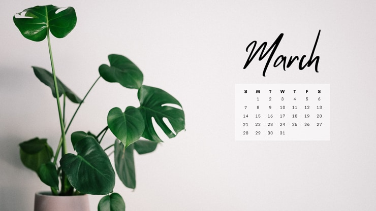 image of a monstera deliciosa plant with a March 2021 calendar