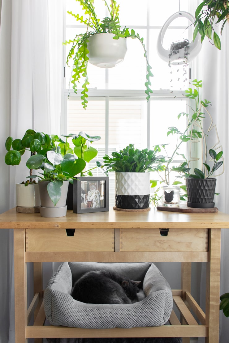 plants on a bar cart with a cat sleeping