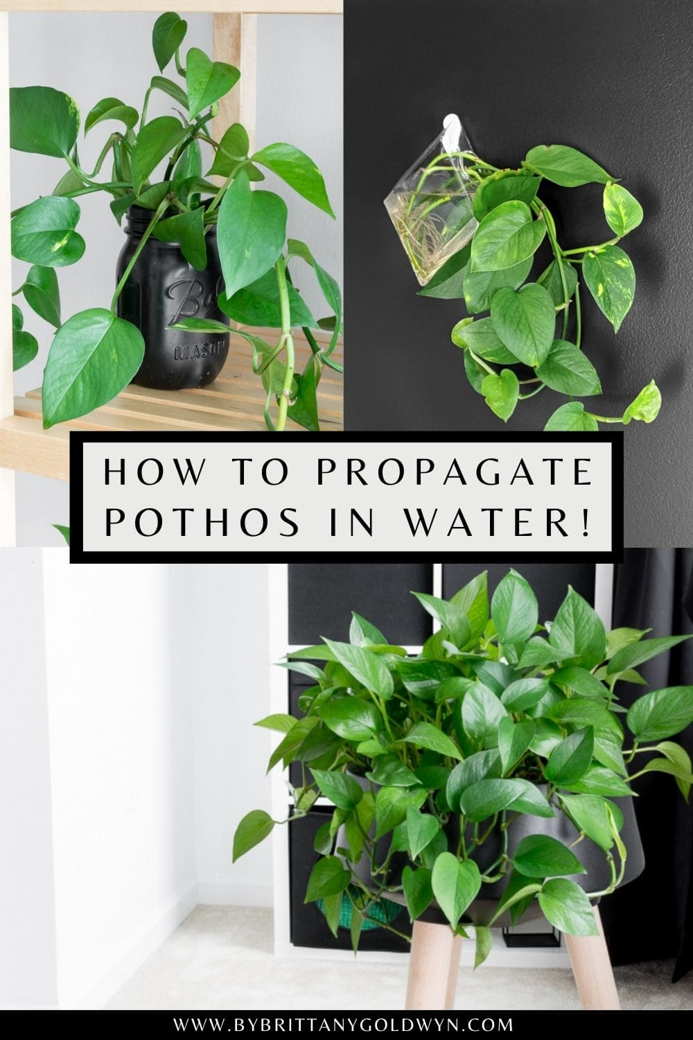 how to propagate pothos pinnable graphic with text overlay