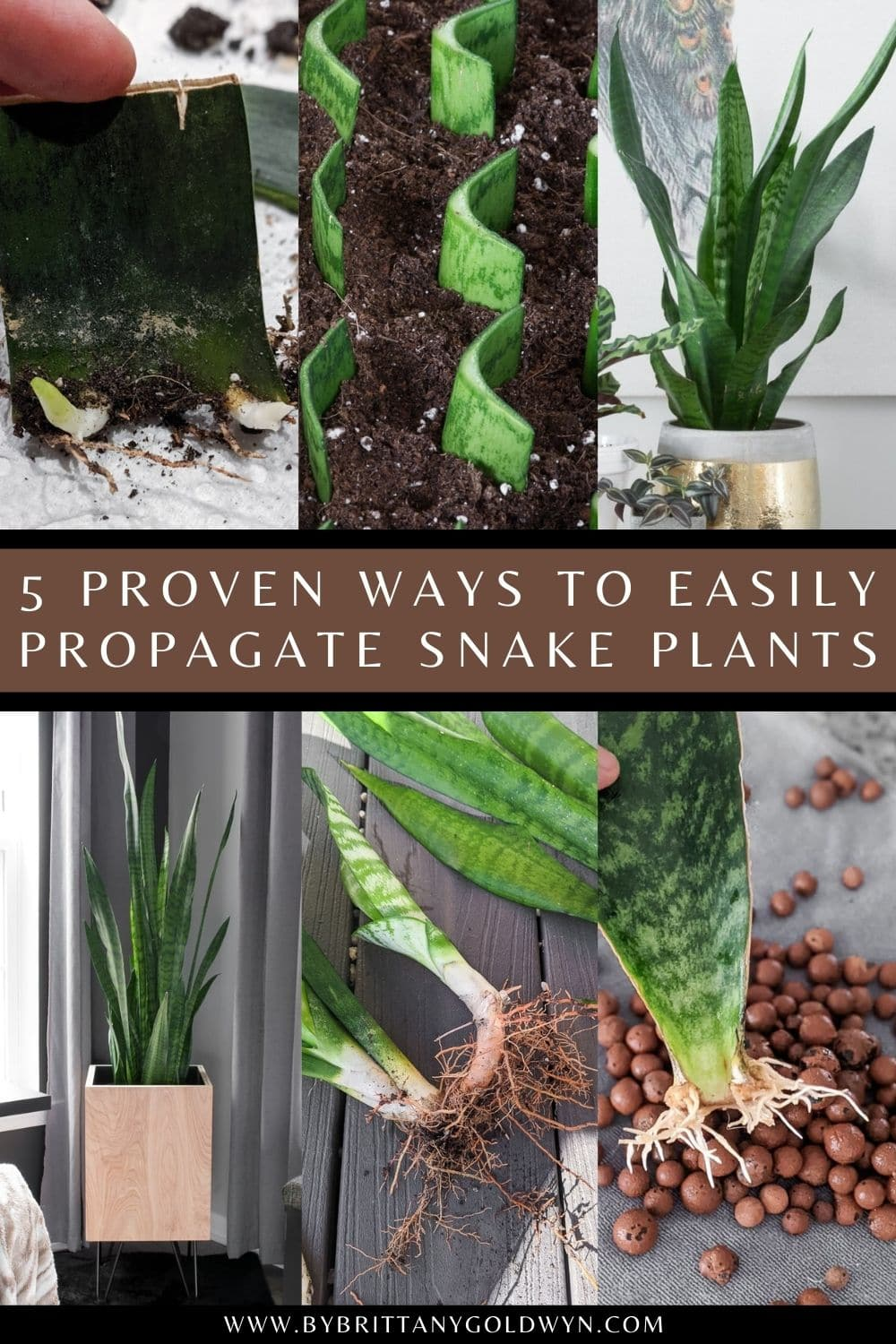 image collage of propagating snake plants with text about ways to propagate snake plants