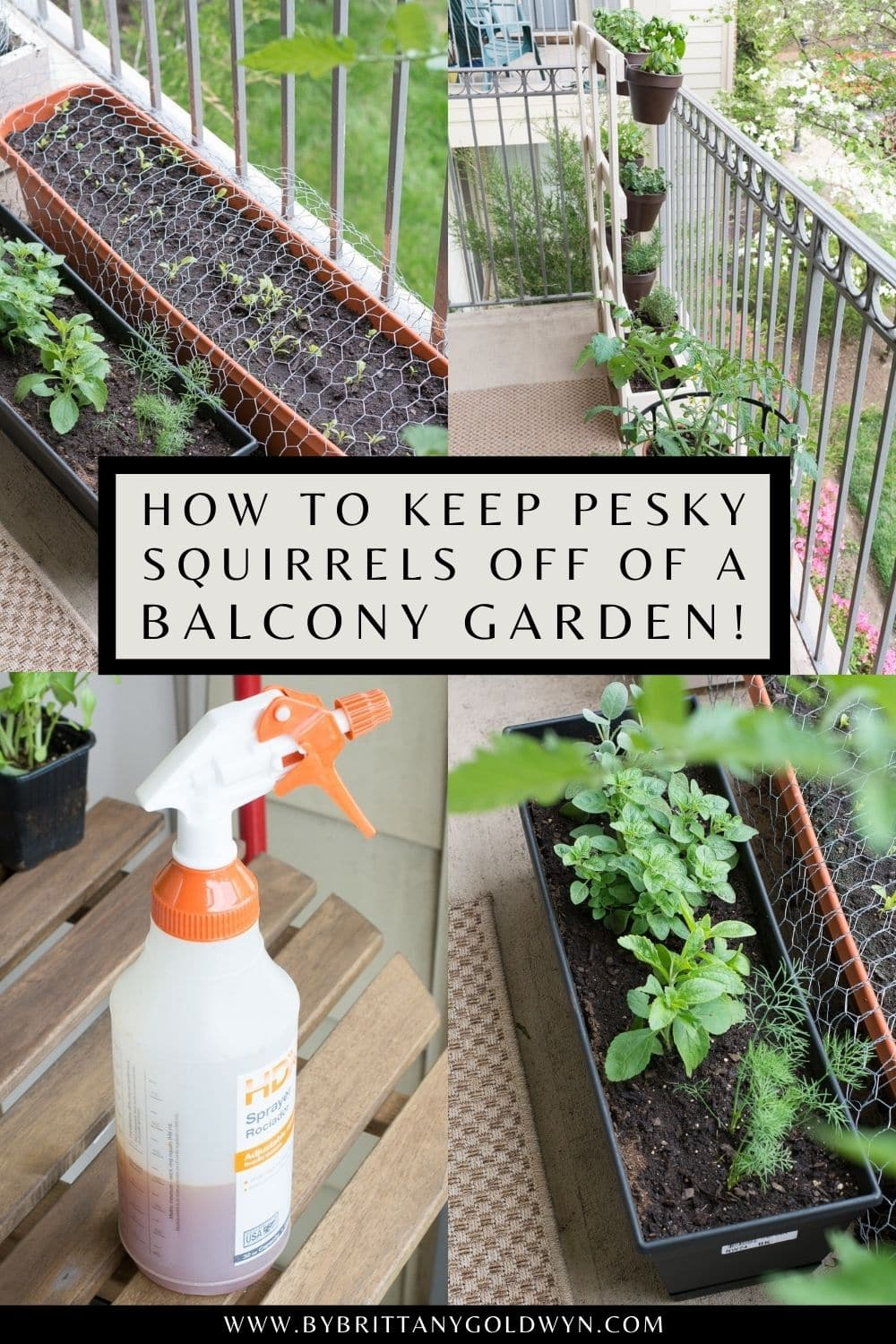 pinnable graphic about how to keep squirrels off your balcony garden