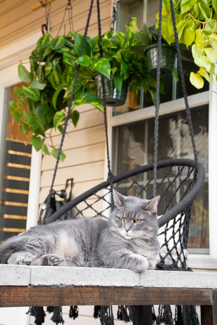 angry cat in a backyard with a lot of hanging plants