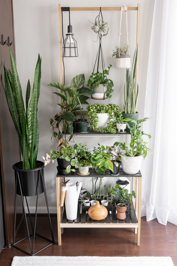 beautiful plant stand filled with plants