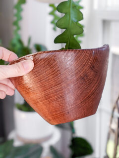 wood teak bowl restored with mineral oil and beeswax