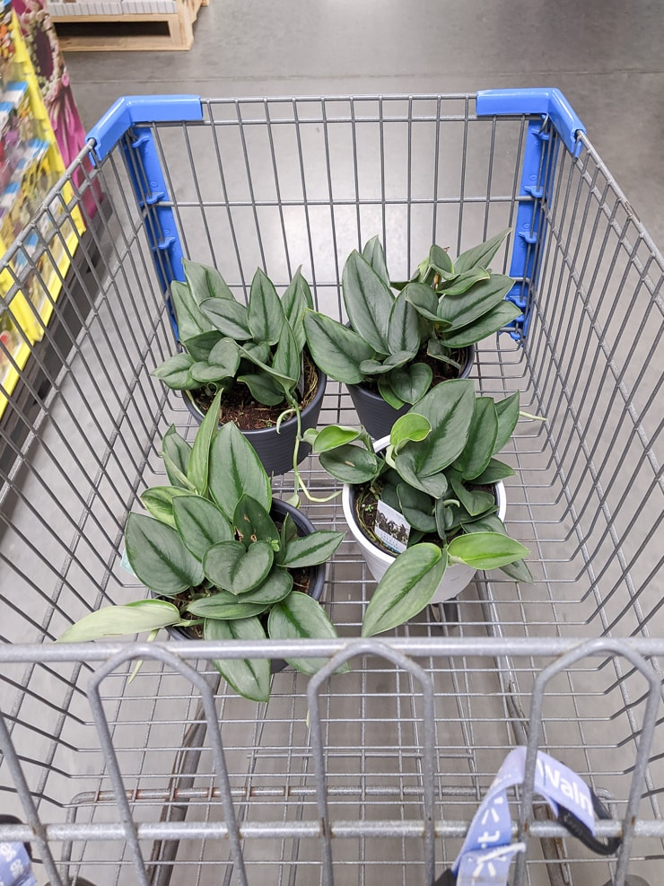 plants in a shopping cart at walmart