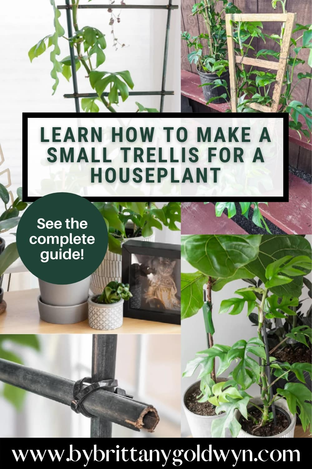 image collage of plants with a diy houseplant trellis and text overlay