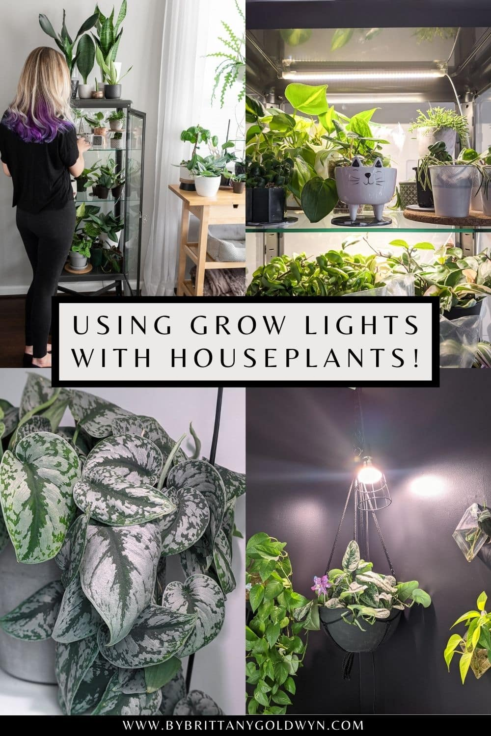 pinnable graphic with images of plants and text about how to use grow lights with houseplants