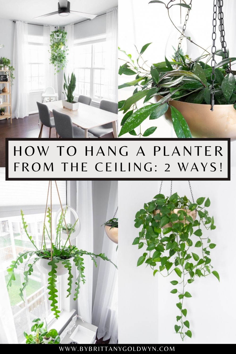 pinnable graphic with images or hanging plants and text about how to hang a planter