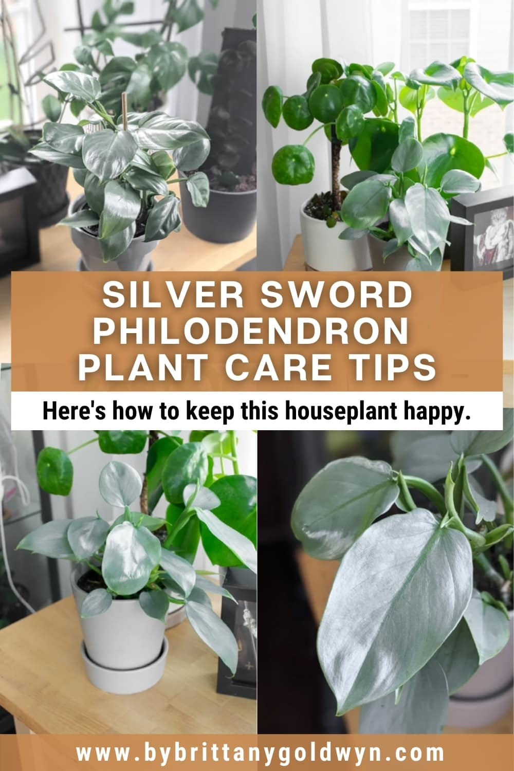 image collage of silver sword philodendron with text overlay