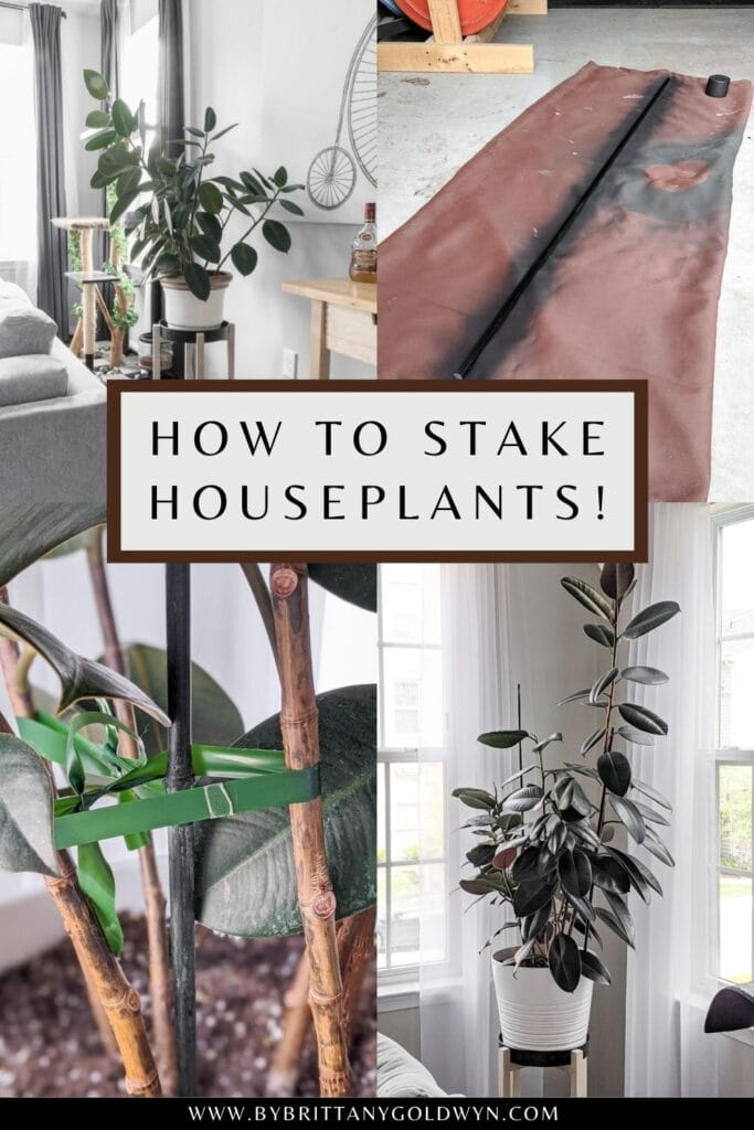 pinnable graphic with photos and text about how to stake and secure tall plants so they won't fall over