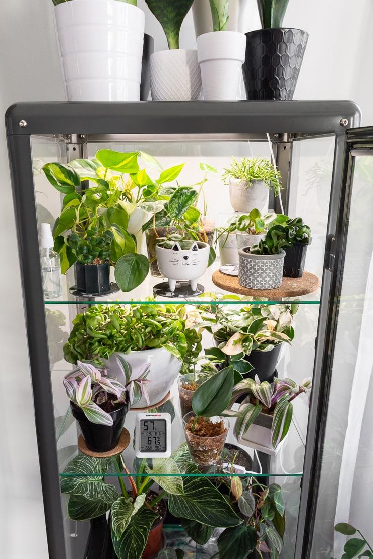 inside of an ikea greenhouse cabinet