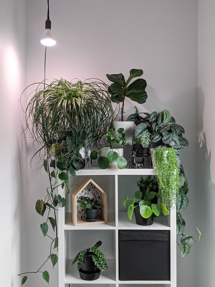 hanging grow light bulb with a bunch of houseplants