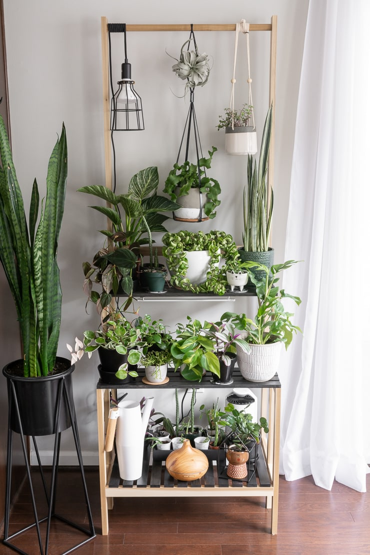 plants on tiered shelving with a hanging grow light