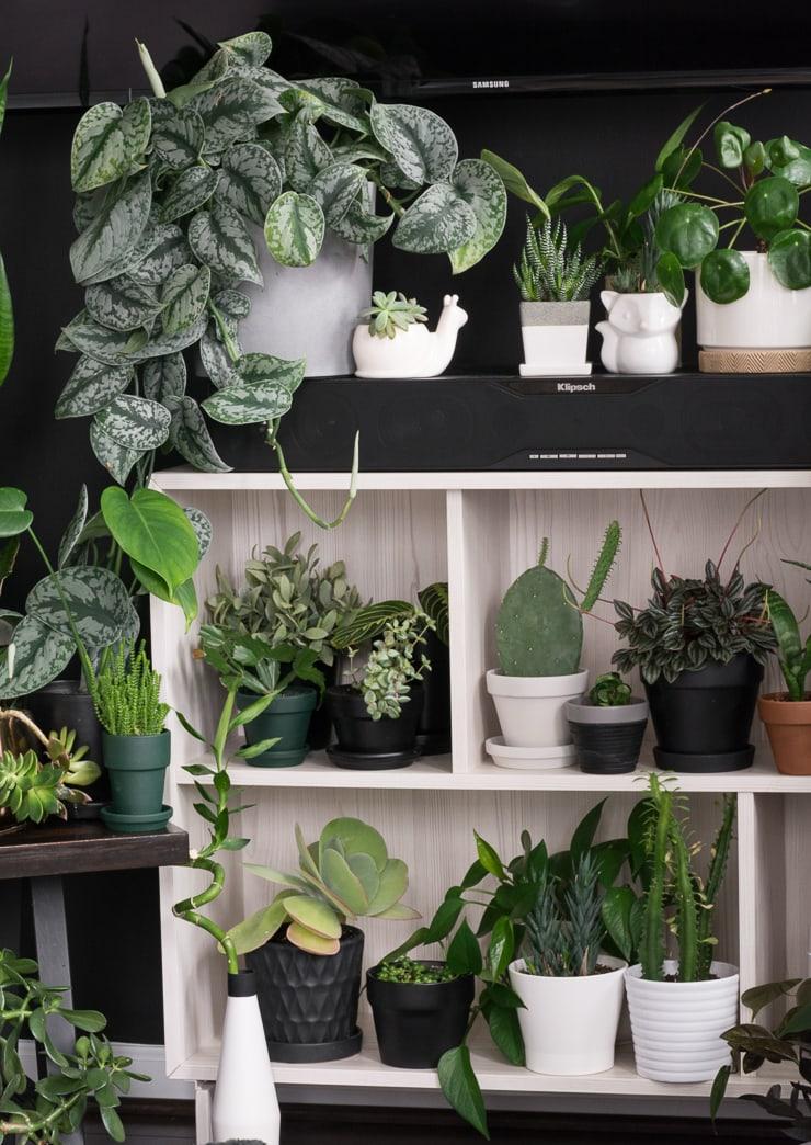 beautiful plants on shelving