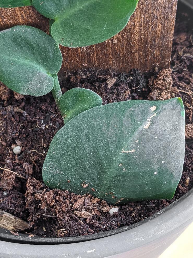 closeup of a shingle plant