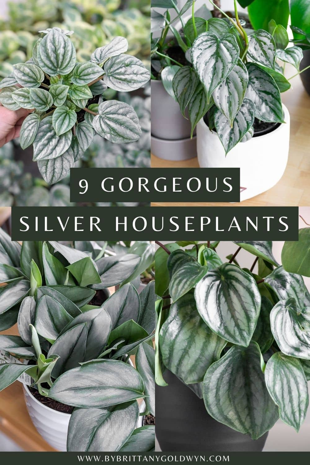 pinnable graphic with images of houseplants and the text 9 gorgeous silver houseplants
