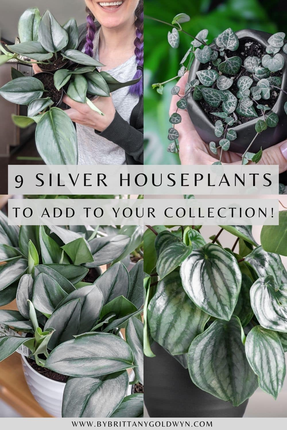 pinnable graphic with images of houseplants and the text 9 silver houseplants to add to your collection