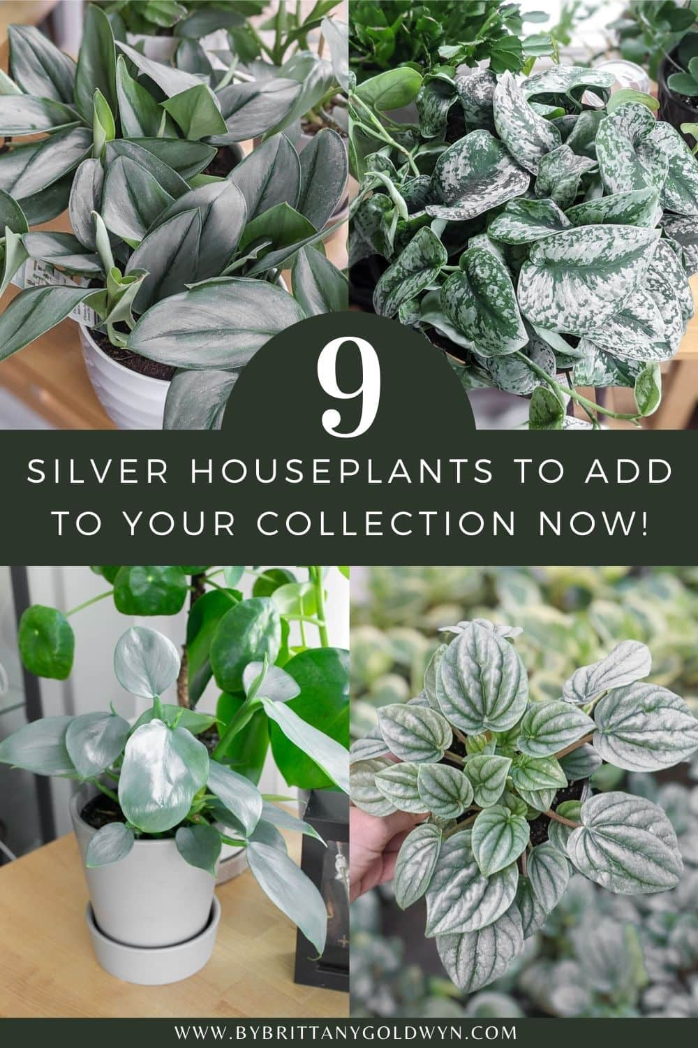 pinnable graphic with images of houseplants and the text 9 silver houseplants to add to your collection now