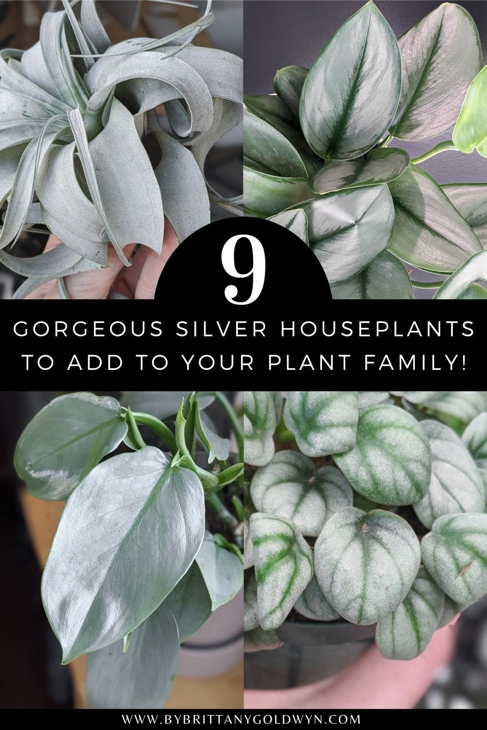 pinnable graphic with images of houseplants and the text 9 gorgeous silver houseplants to add to your plant family