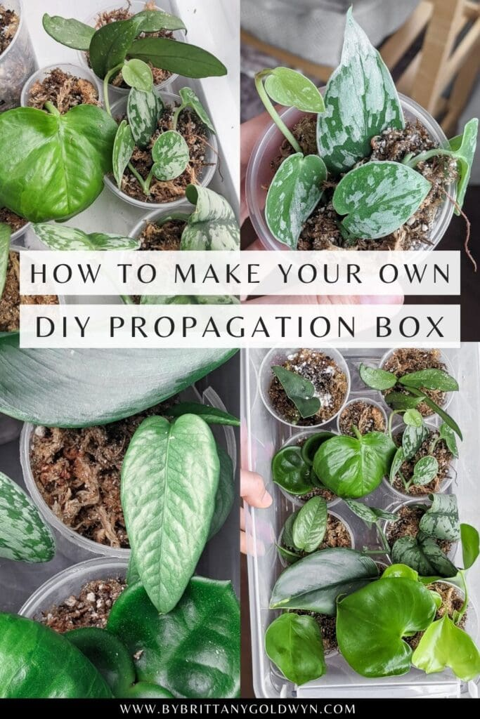 pinnable graphic about how to make a propagation box including images and text overlay