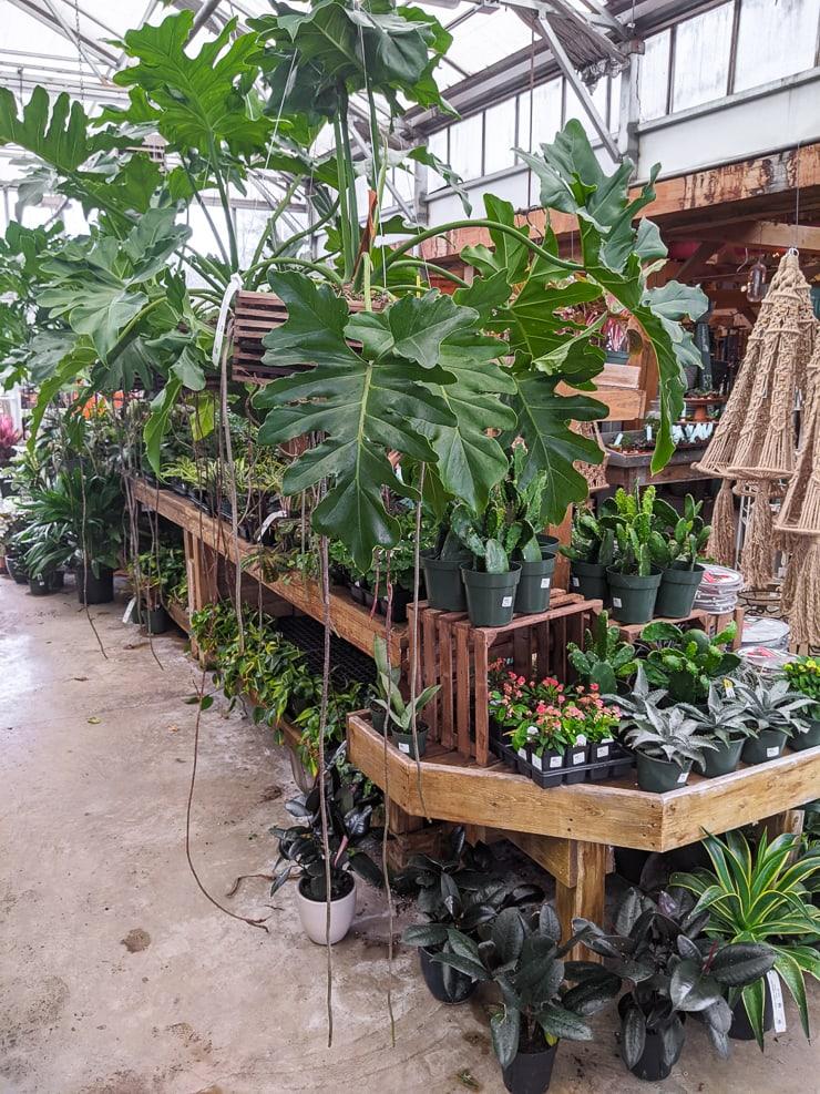 beautiful plants in a nursery