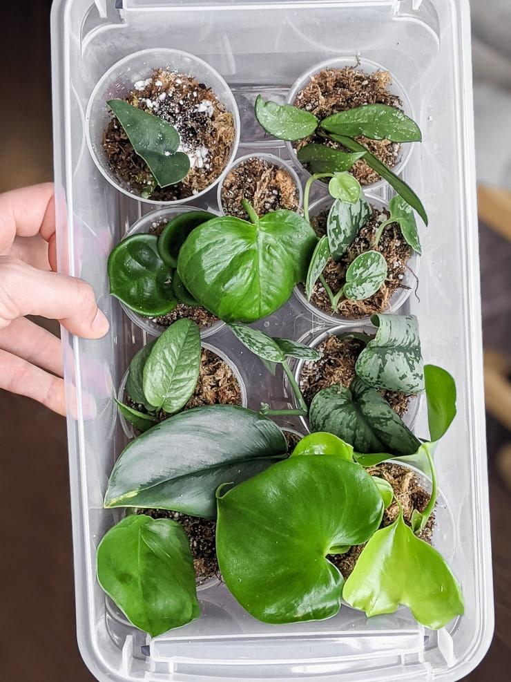 DIY moss propagation box