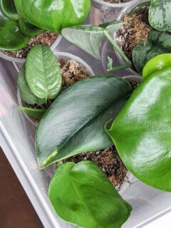 How to make a plant propagation box