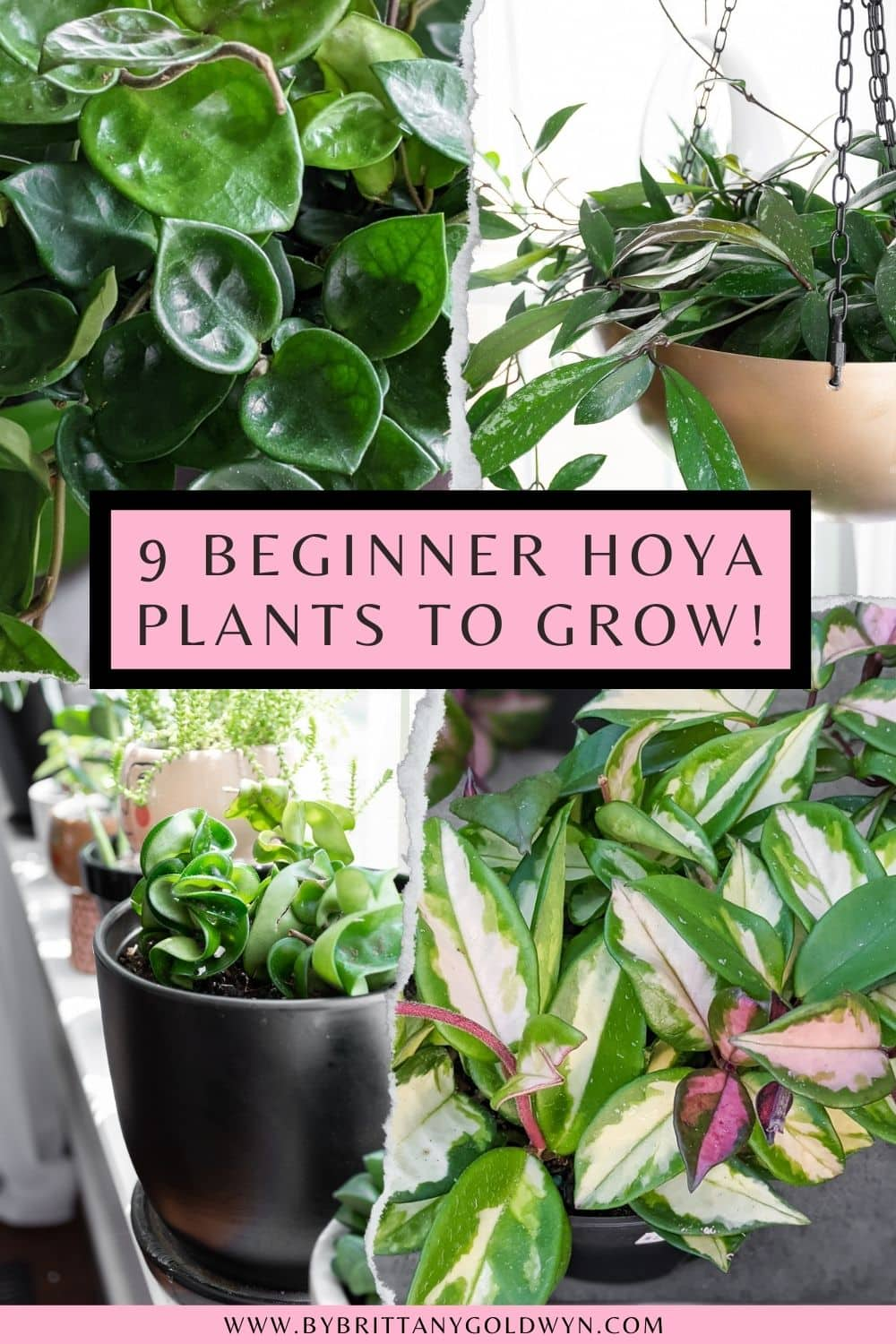 pinnable graphic about 9 hoya plant varieties to try including photos and text overlay