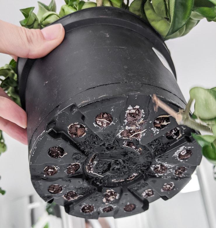 bottom of a plastic nursery pot