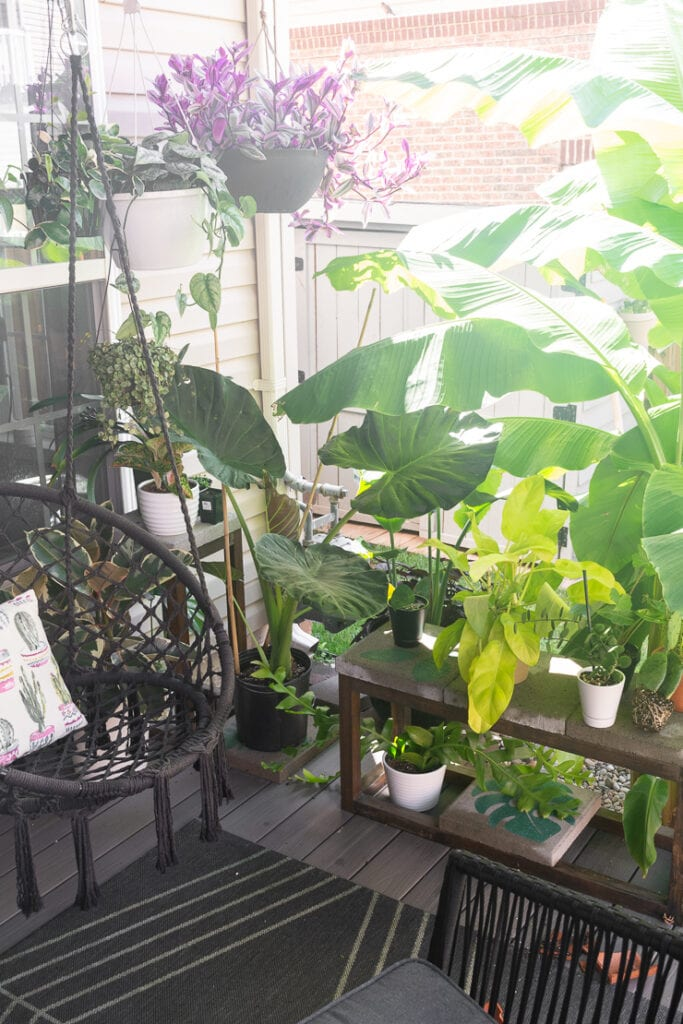 lots of plants on a beautiful deck